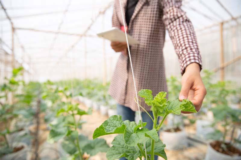 Asesoría agronómica