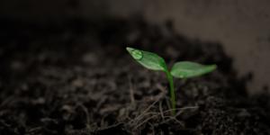 Claves para enraizar plantas